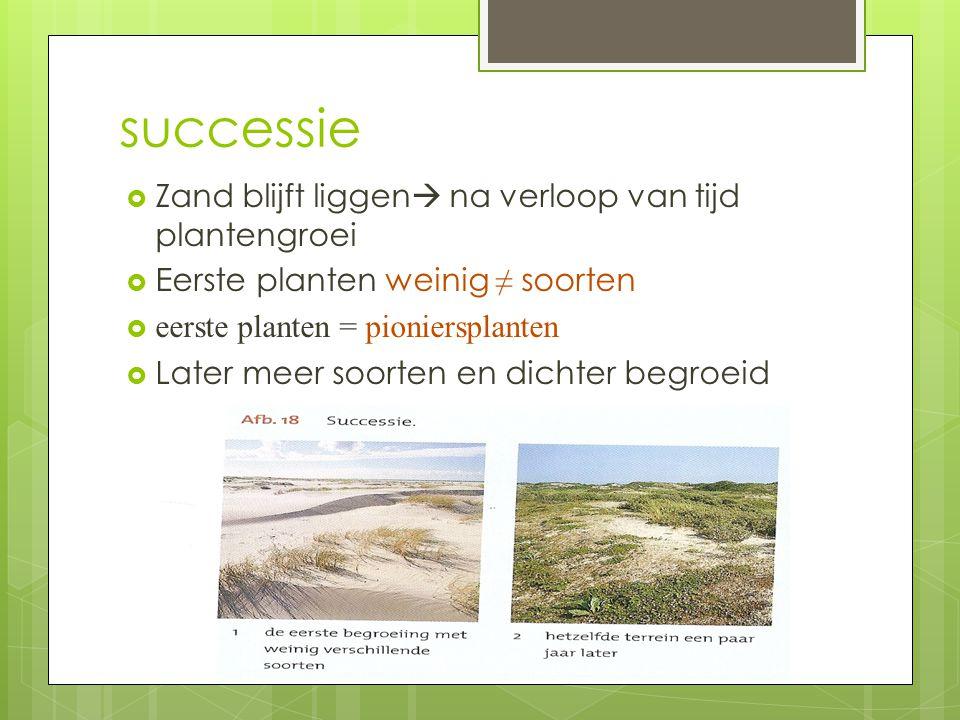 successie Zand blijft liggen na verloop van tijd plantengroei