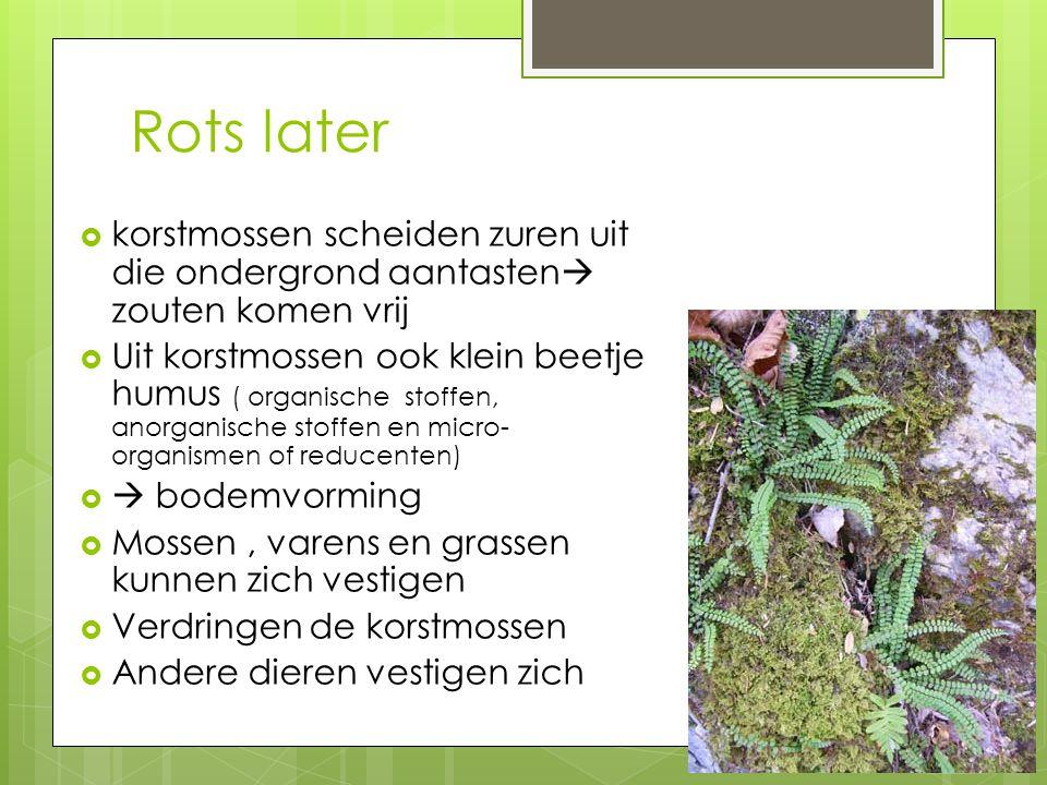 Rots later korstmossen scheiden zuren uit die ondergrond aantasten zouten komen vrij.