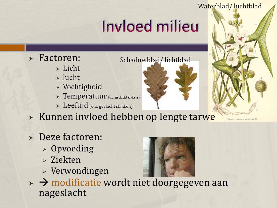 Invloed milieu Factoren: Kunnen invloed hebben op lengte tarwe
