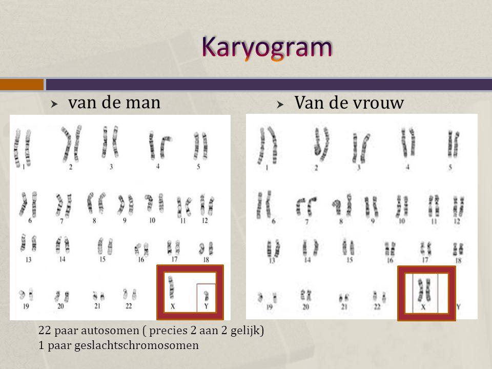 Karyogram van de man Van de vrouw