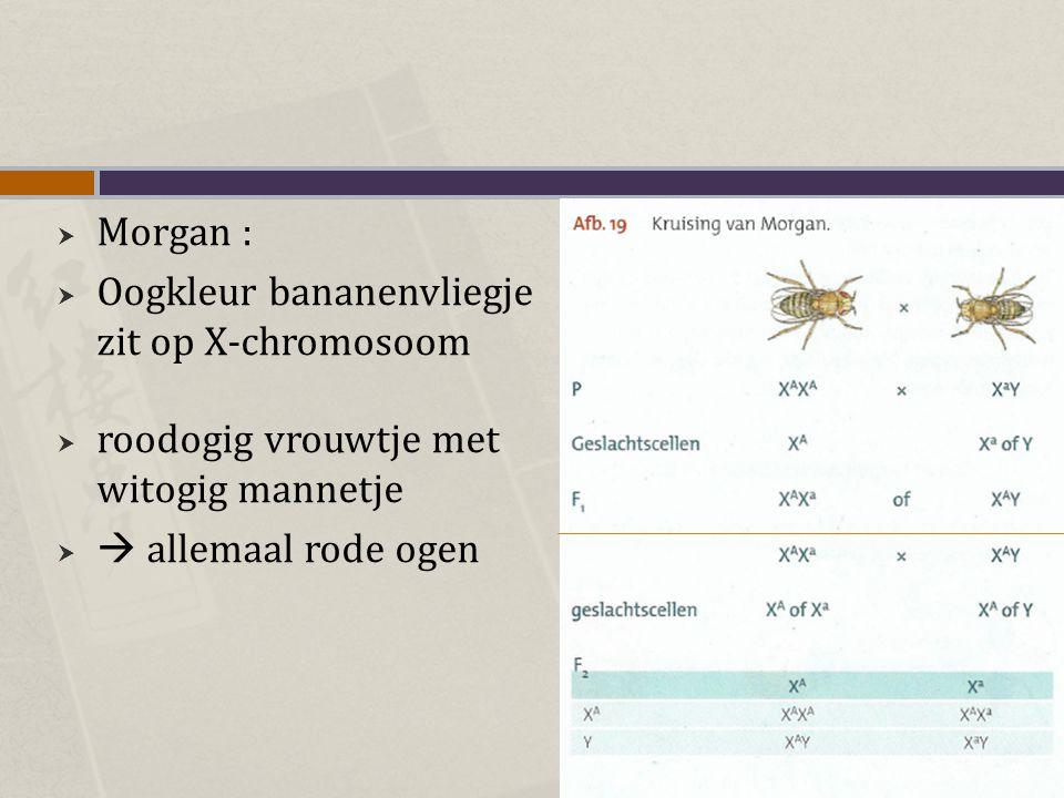 Morgan : Oogkleur bananenvliegje zit op X-chromosoom.