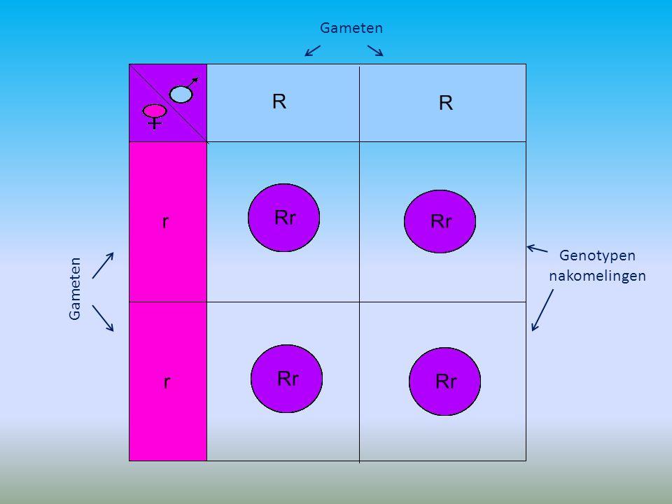 Genotypen nakomelingen