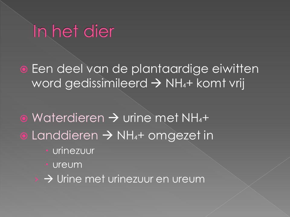 In het dier Een deel van de plantaardige eiwitten word gedissimileerd  NH4+ komt vrij. Waterdieren  urine met NH4+