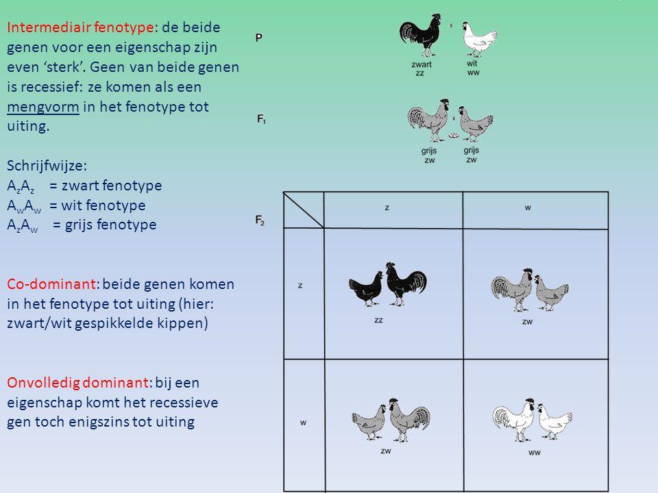 Intermediair fenotype: de beide genen voor een eigenschap zijn even 'sterk'. Geen van beide genen is recessief: ze komen als een mengvorm in het fenotype tot uiting.