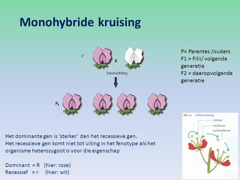 Monohybride kruising P= Parentes /ouders