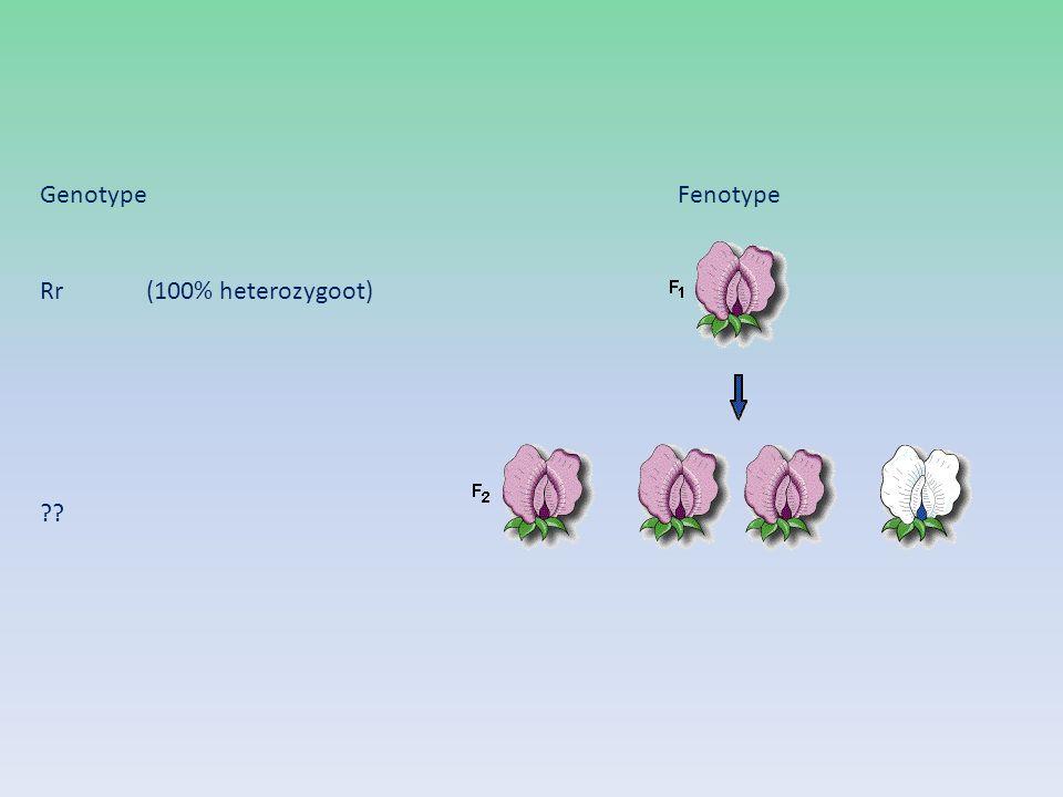 Genotype Fenotype Rr (100% heterozygoot)