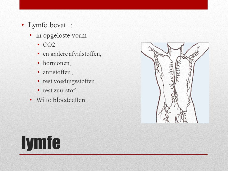 lymfe Lymfe bevat : in opgeloste vorm Witte bloedcellen CO2