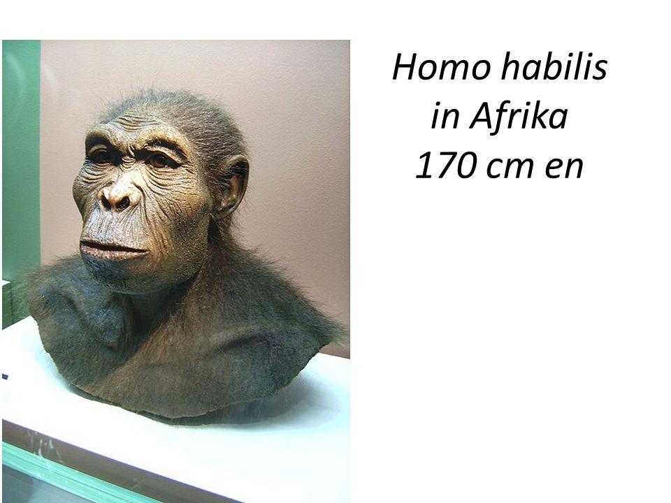 Homo habilis in Afrika 170 cm en