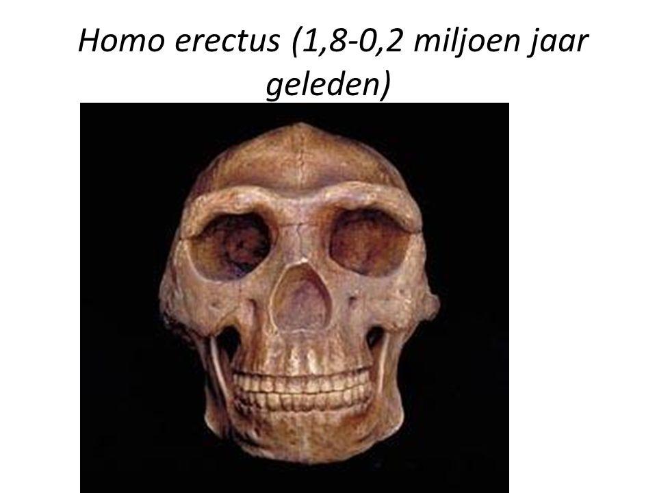Homo erectus (1,8-0,2 miljoen jaar geleden)