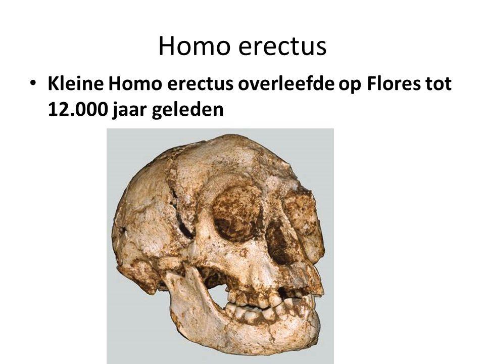 Homo erectus Kleine Homo erectus overleefde op Flores tot 12.000 jaar geleden
