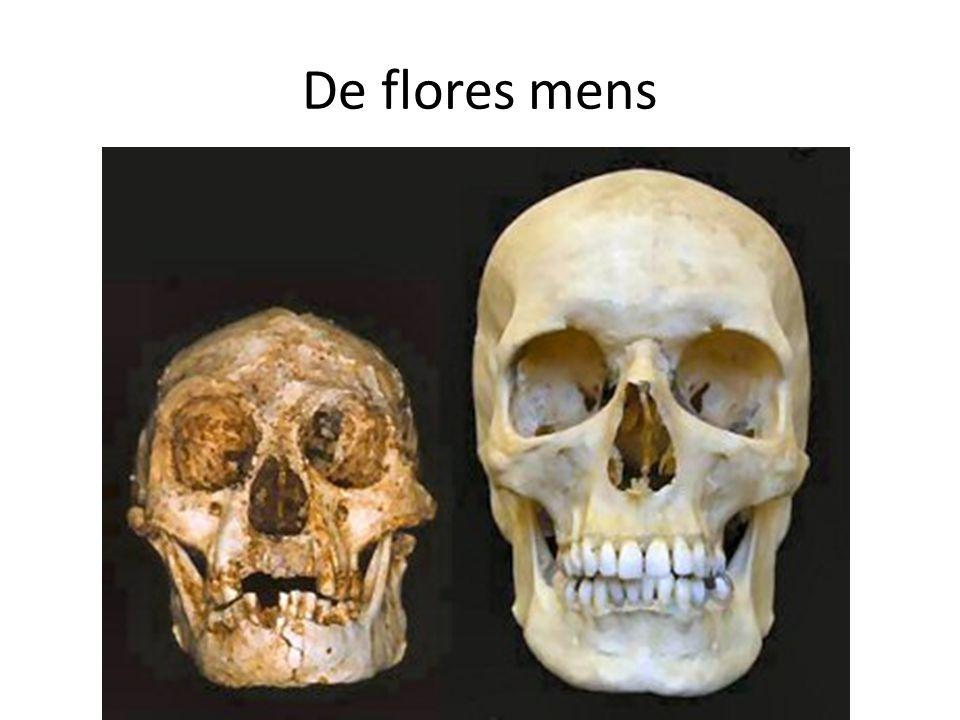 De flores mens