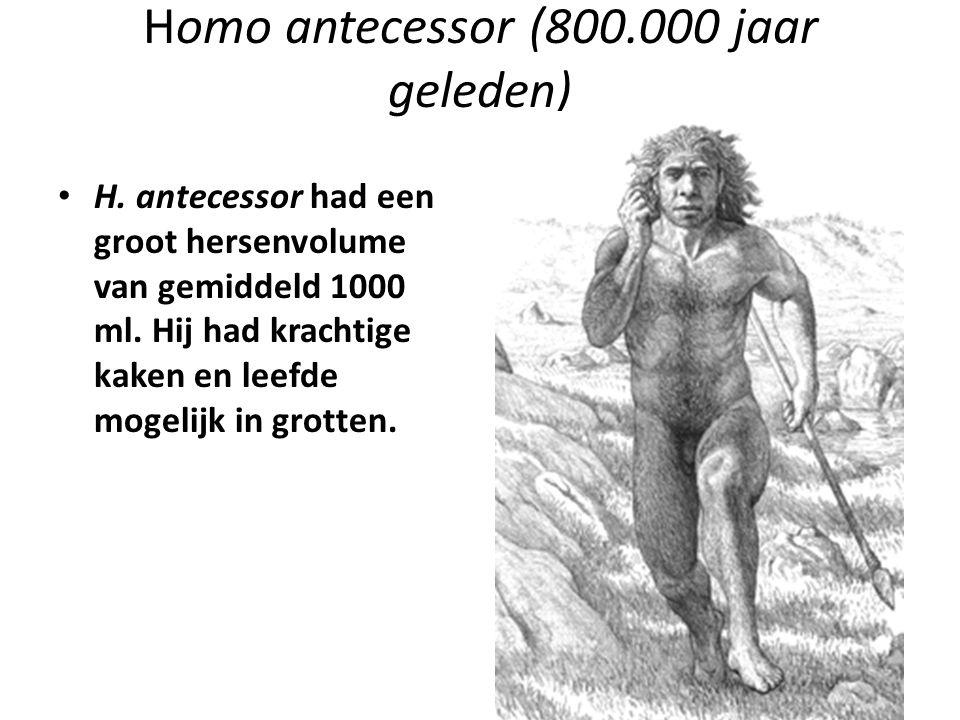 Homo antecessor (800.000 jaar geleden)