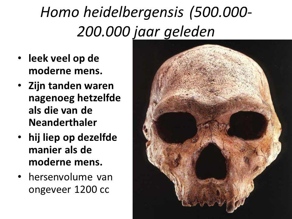 Homo heidelbergensis (500.000-200.000 jaar geleden