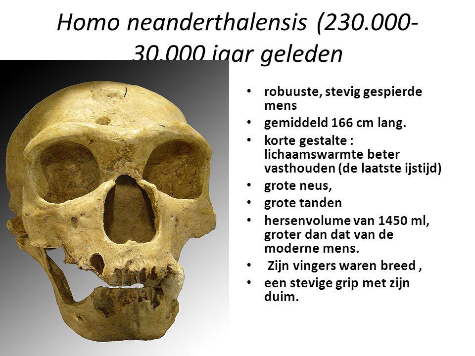 Homo neanderthalensis (230.000-30.000 jaar geleden