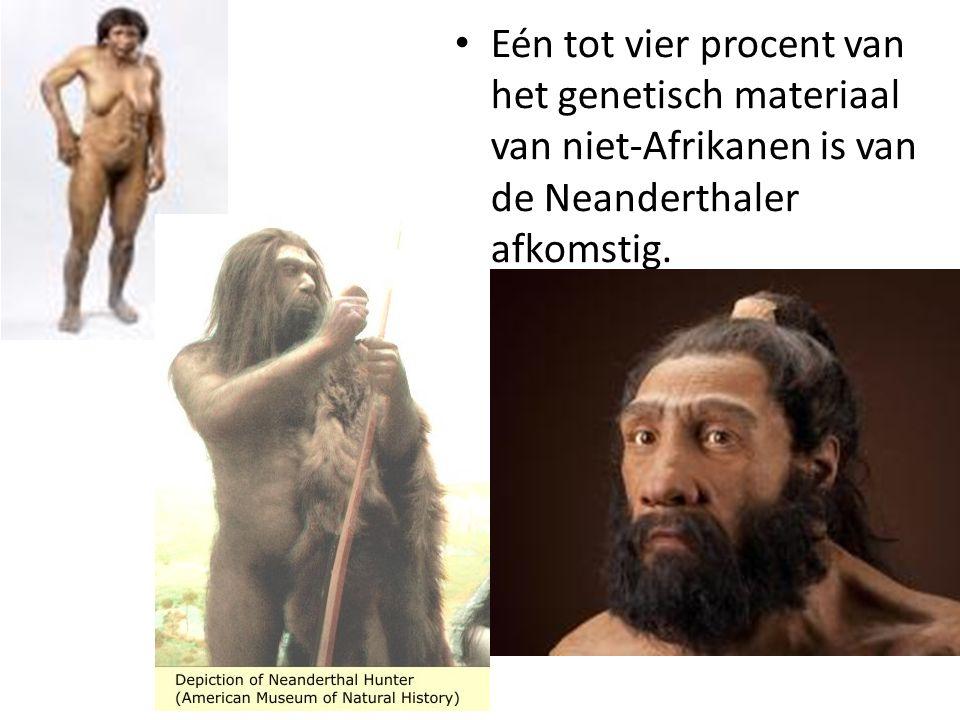 Eén tot vier procent van het genetisch materiaal van niet-Afrikanen is van de Neanderthaler afkomstig.