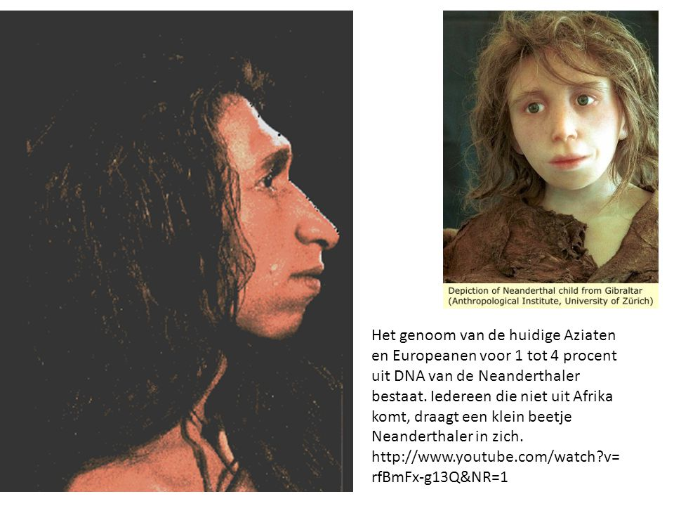 Het genoom van de huidige Aziaten en Europeanen voor 1 tot 4 procent uit DNA van de Neanderthaler bestaat.