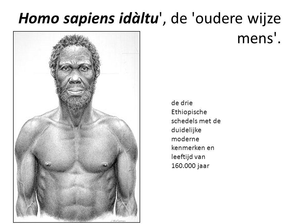 Homo sapiens idàltu , de oudere wijze mens .