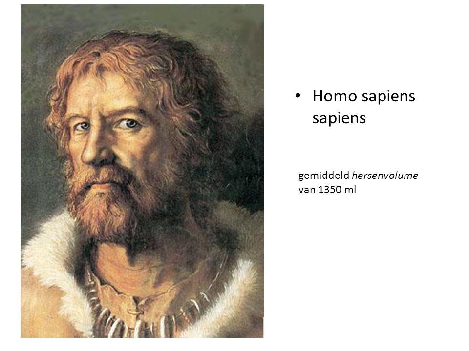 Homo sapiens sapiens gemiddeld hersenvolume van 1350 ml