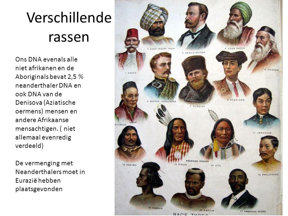 Verschillende rassen