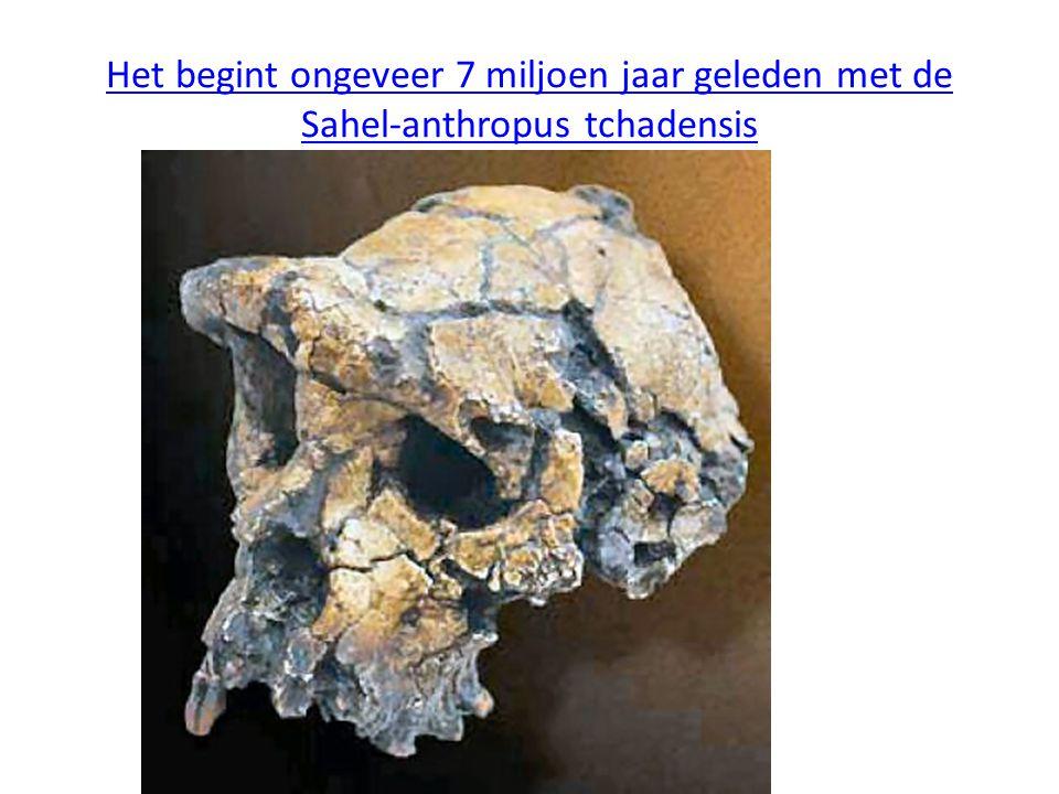 Het begint ongeveer 7 miljoen jaar geleden met de Sahel-anthropus tchadensis