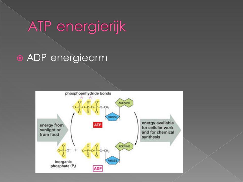 ATP energierijk ADP energiearm