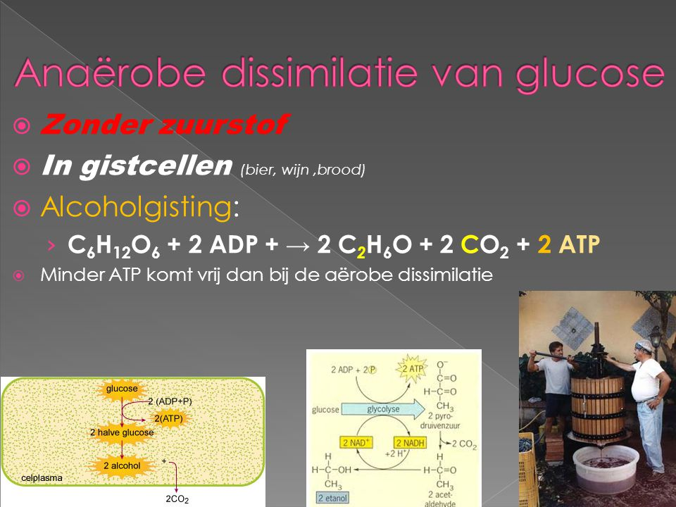 Anaërobe dissimilatie van glucose