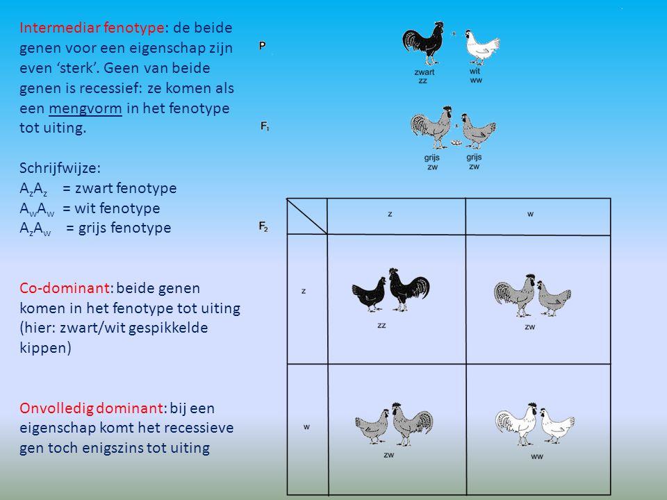 Intermediar fenotype: de beide genen voor een eigenschap zijn even 'sterk'. Geen van beide genen is recessief: ze komen als een mengvorm in het fenotype tot uiting.