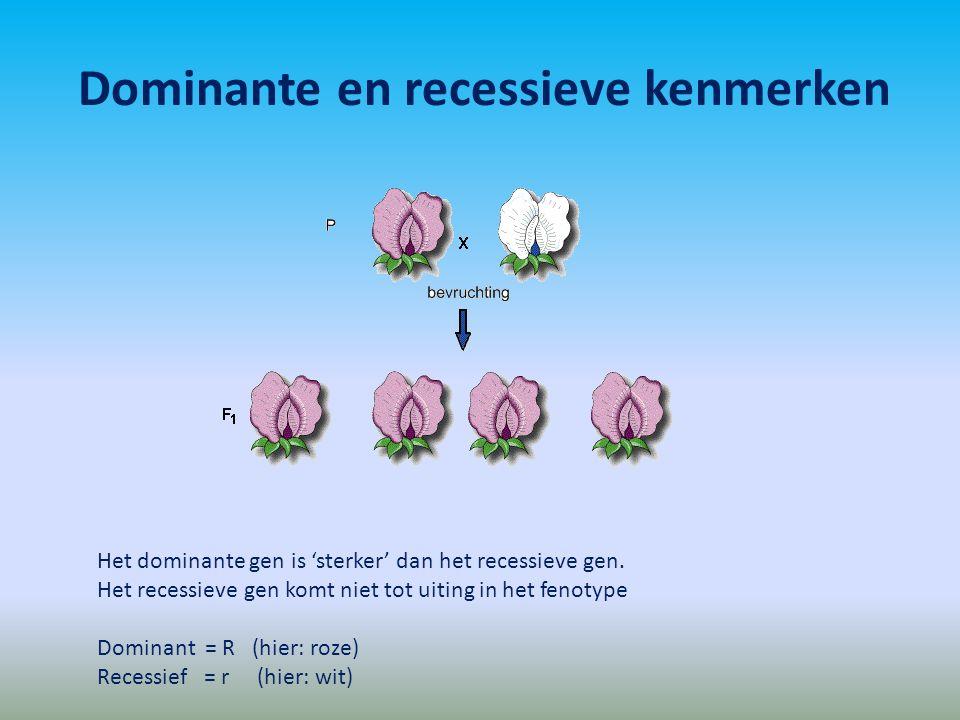 Dominante en recessieve kenmerken