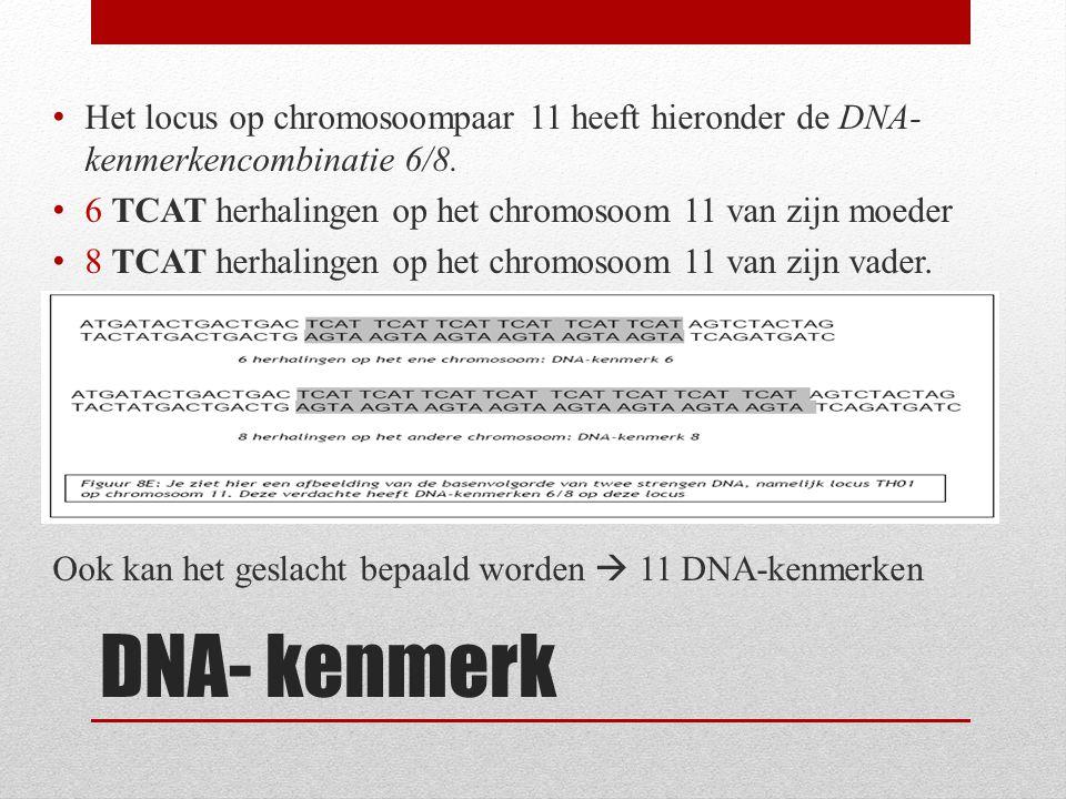 Het locus op chromosoompaar 11 heeft hieronder de DNA-kenmerkencombinatie 6/8.