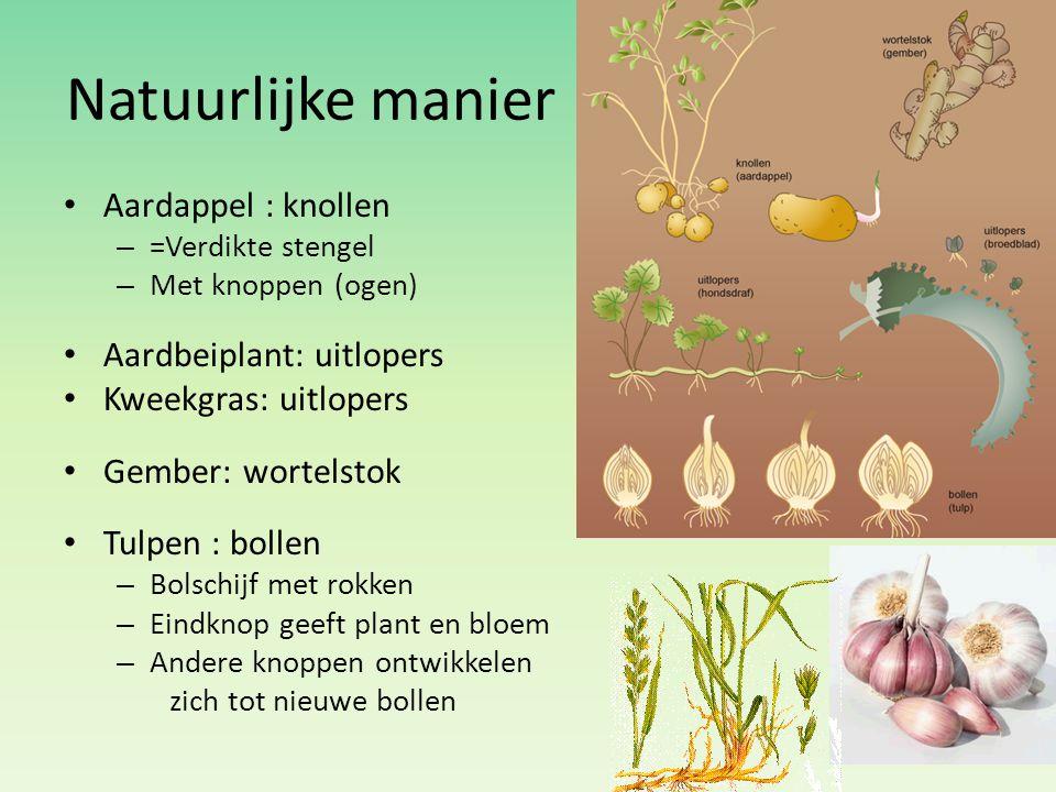 Natuurlijke manier Aardappel : knollen Aardbeiplant: uitlopers