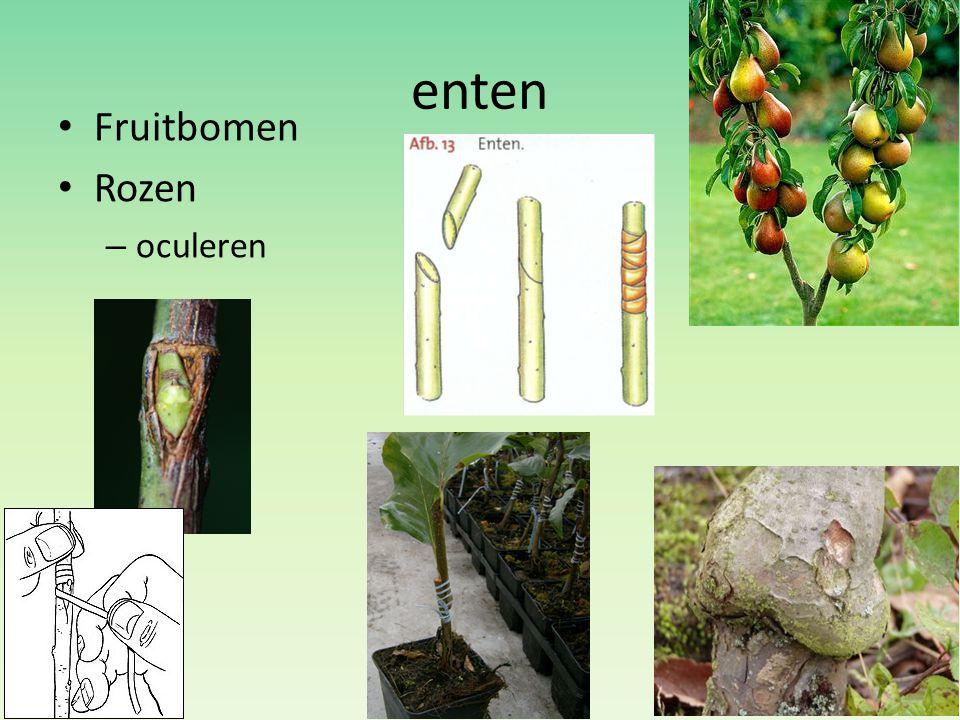 enten Fruitbomen Rozen oculeren