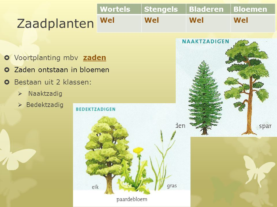 Zaadplanten Wortels Stengels Bladeren Bloemen Wel