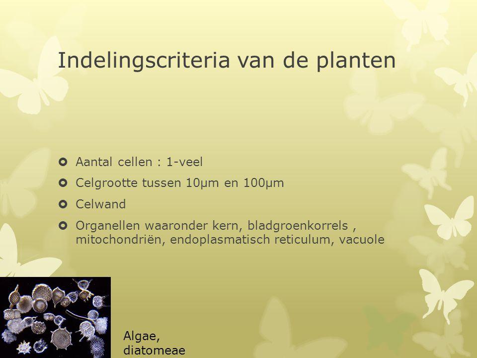 Indelingscriteria van de planten