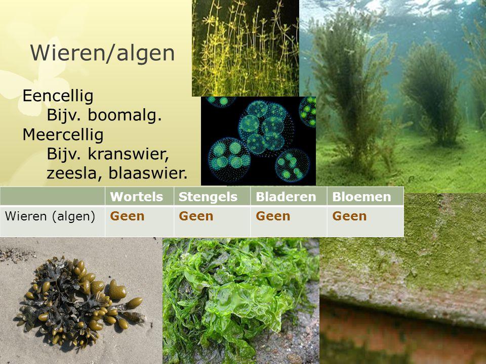 Wieren/algen Eencellig Bijv. boomalg. Meercellig