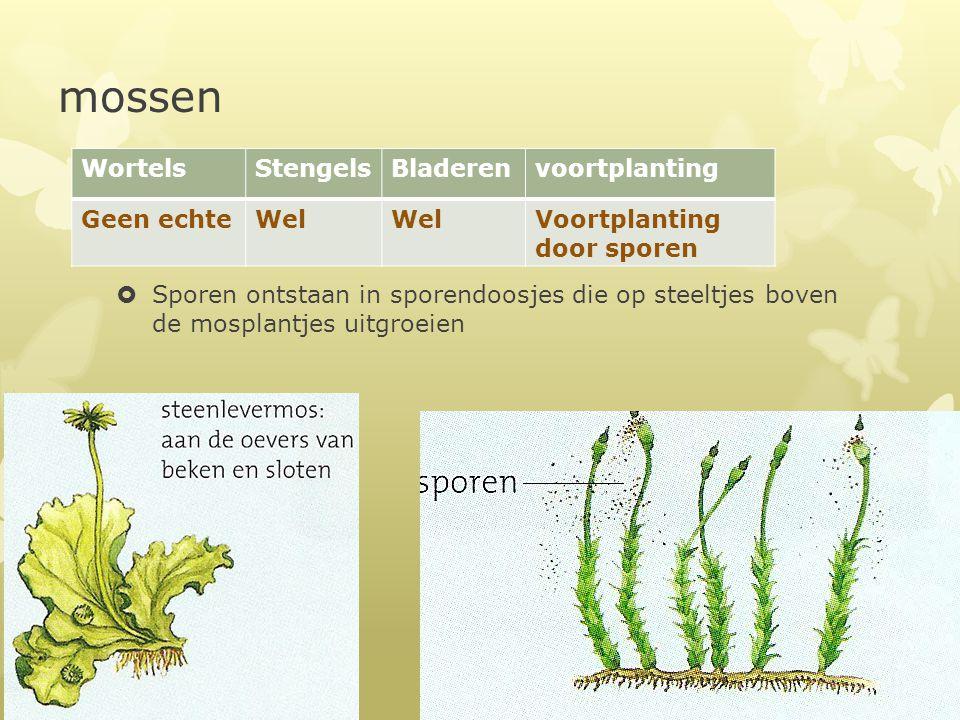 mossen Wortels Stengels Bladeren voortplanting Geen echte Wel
