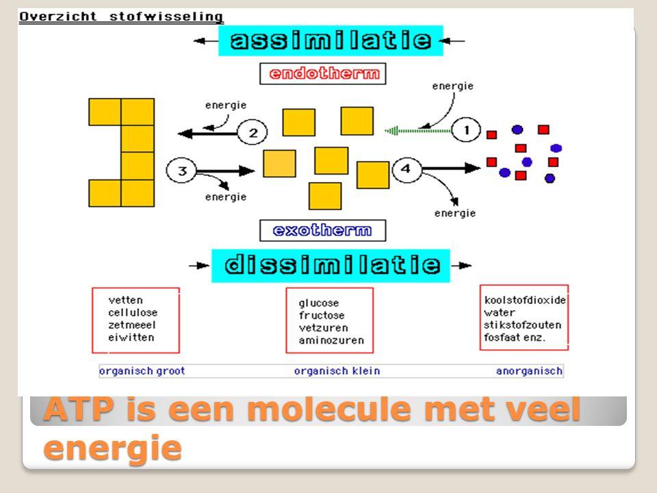 ATP is een molecule met veel energie