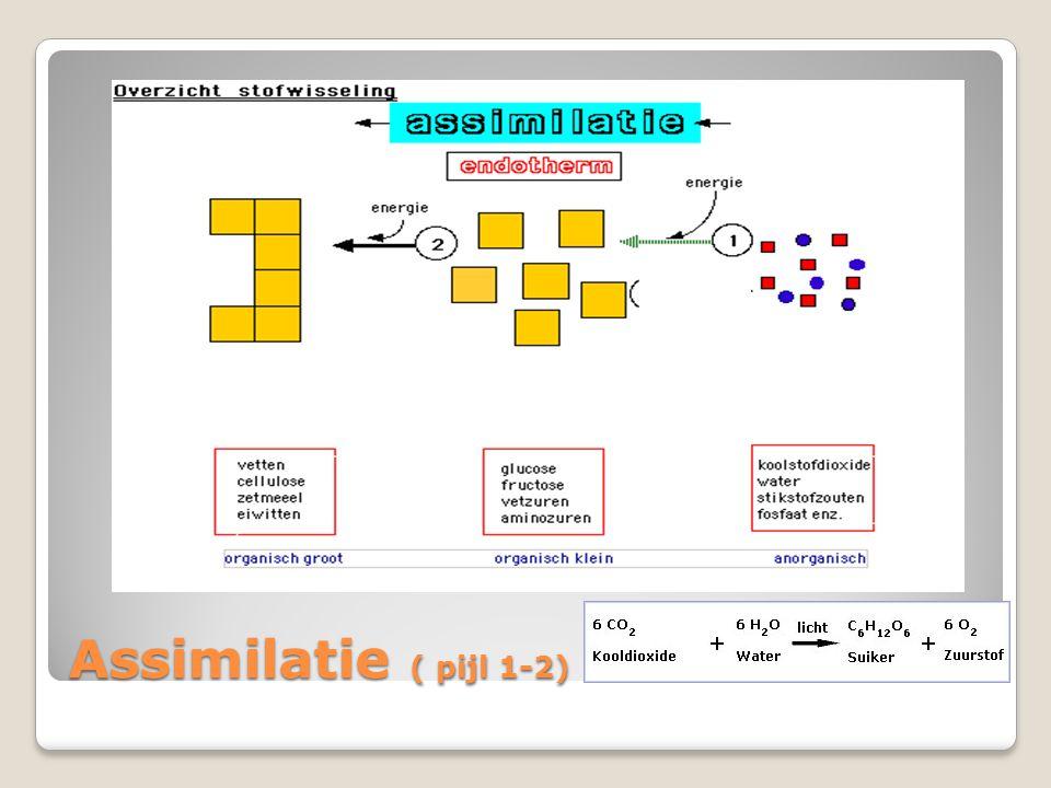 Assimilatie ( pijl 1-2)