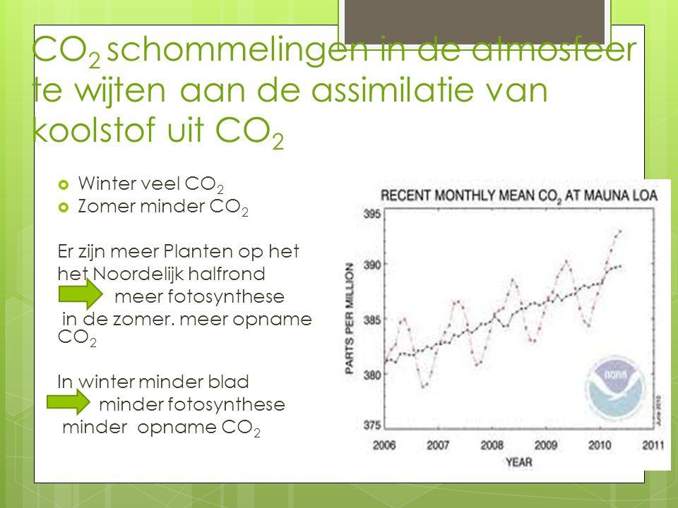 CO2 schommelingen in de atmosfeer te wijten aan de assimilatie van koolstof uit CO2
