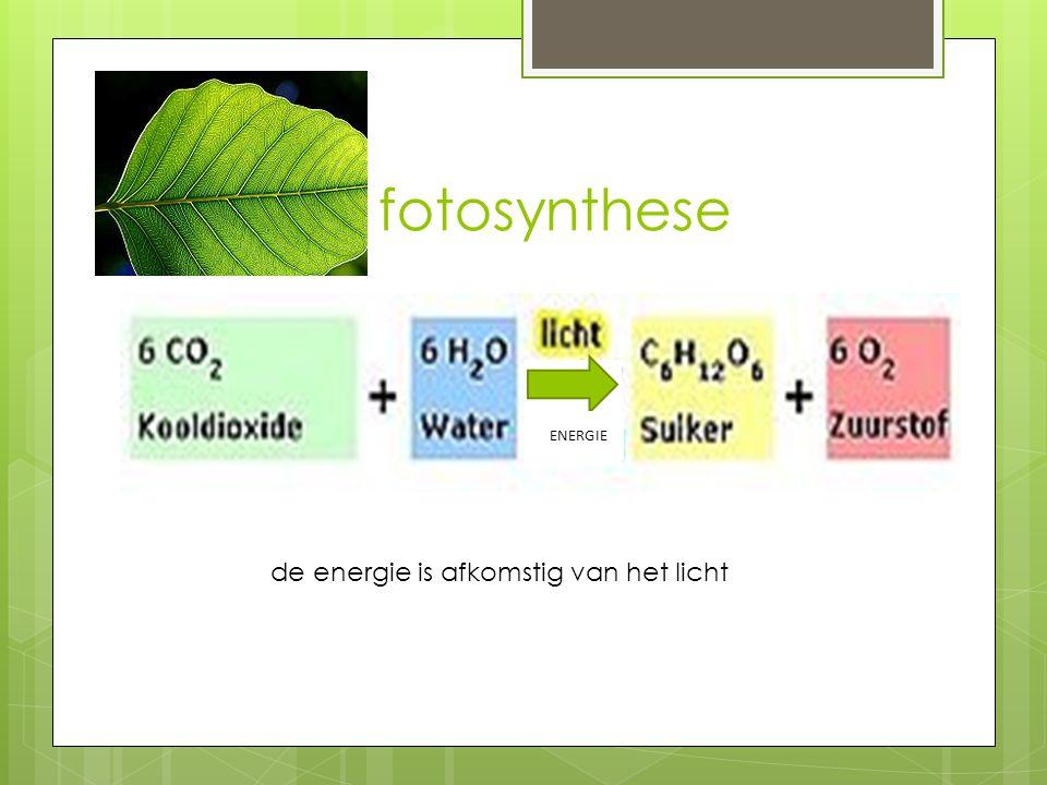 fotosynthese energie ENERGIE de energie is afkomstig van het licht