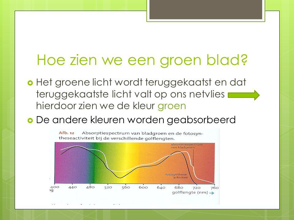 Hoe zien we een groen blad
