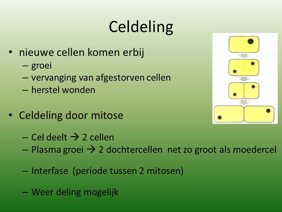 Celdeling nieuwe cellen komen erbij Celdeling door mitose groei