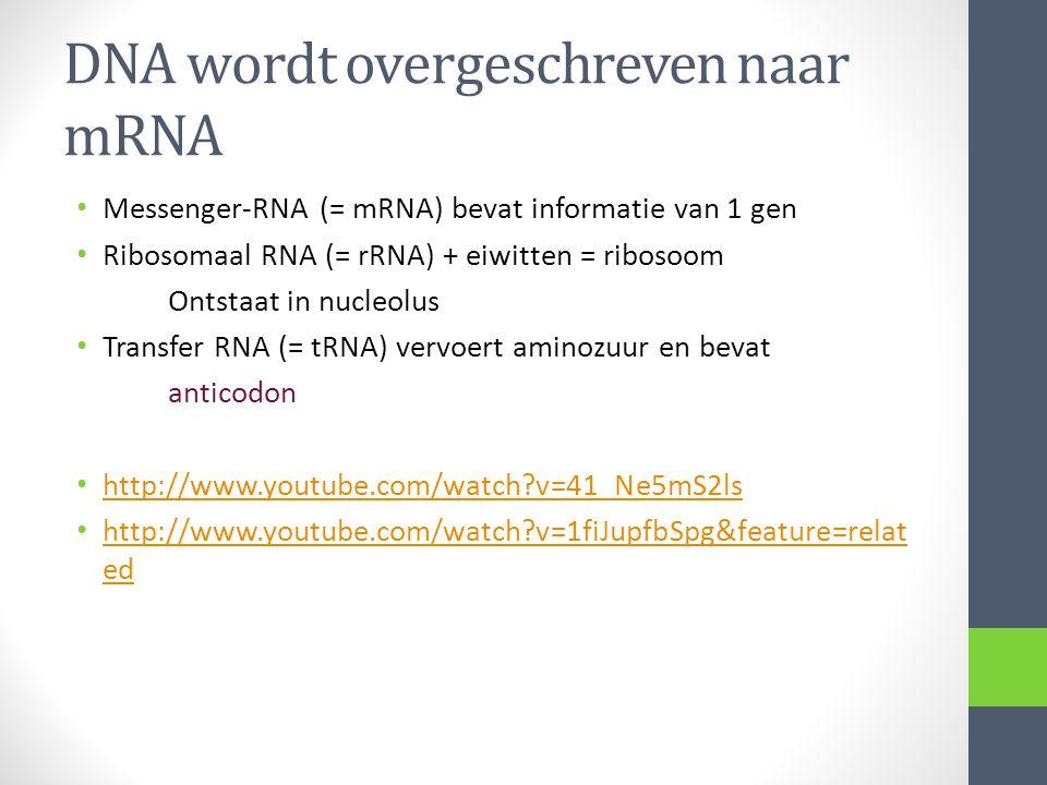 DNA wordt overgeschreven naar mRNA