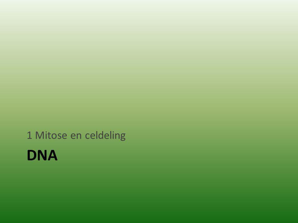 1 Mitose en celdeling DNA