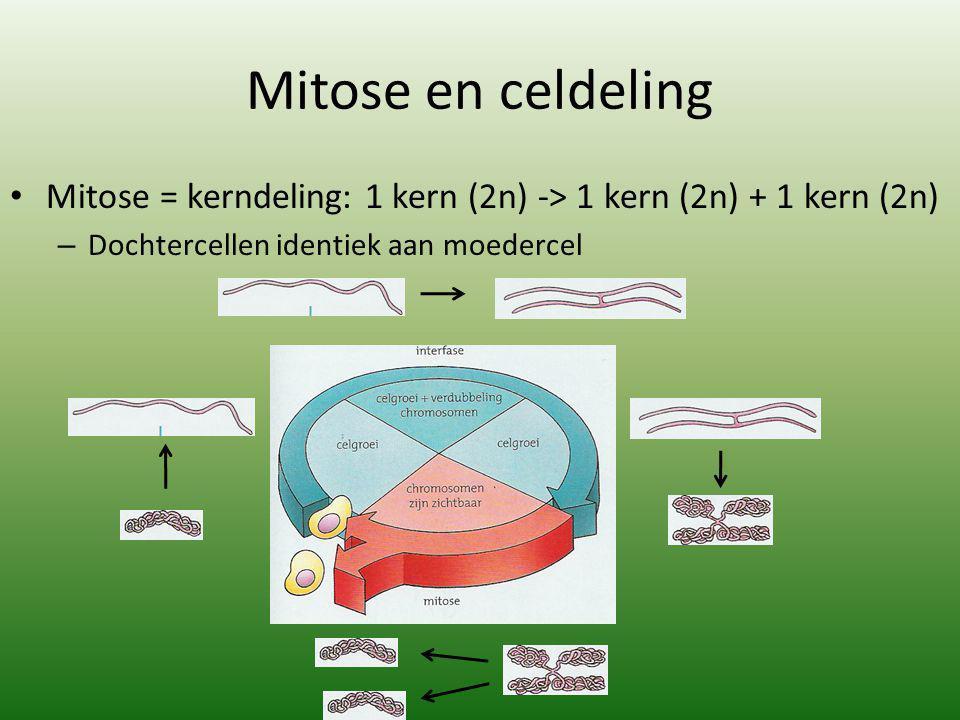 Mitose en celdeling Mitose = kerndeling: 1 kern (2n) -> 1 kern (2n) + 1 kern (2n) Dochtercellen identiek aan moedercel.