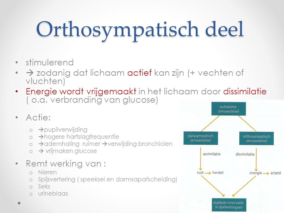Orthosympatisch deel stimulerend