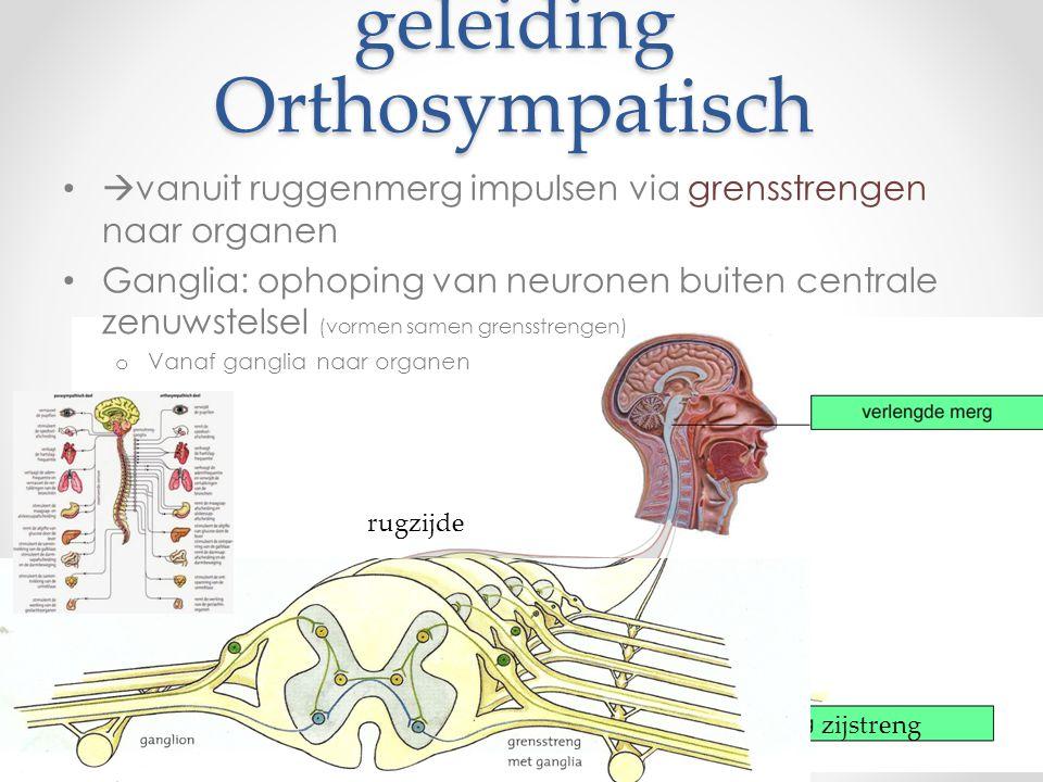 geleiding Orthosympatisch