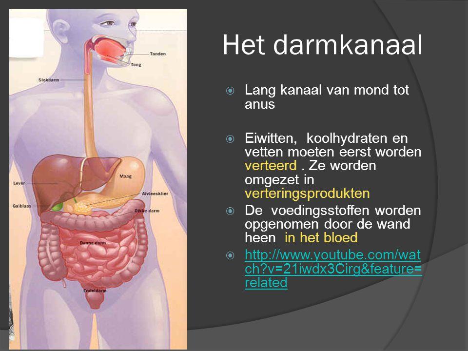 Het darmkanaal Lang kanaal van mond tot anus