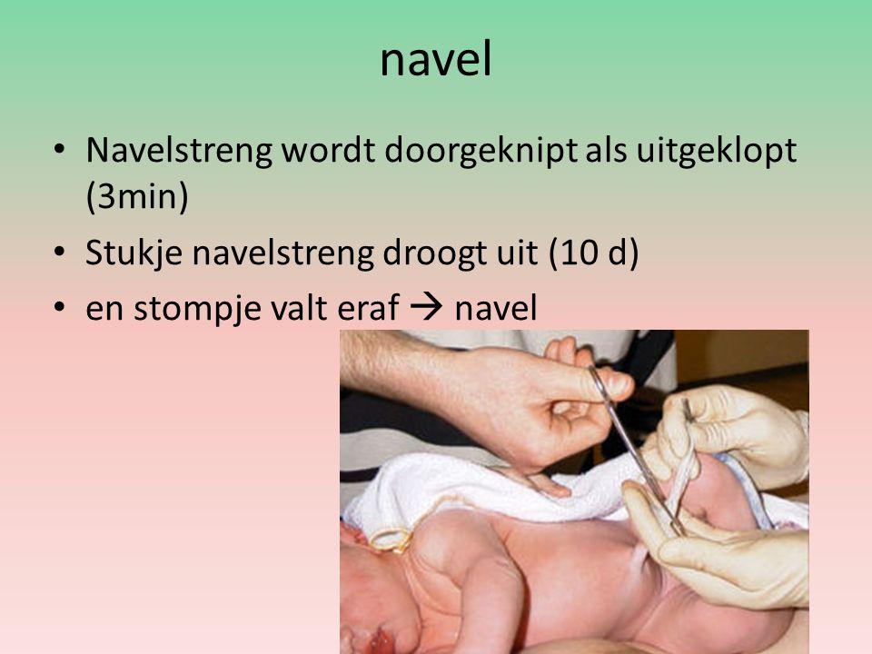 navel Navelstreng wordt doorgeknipt als uitgeklopt (3min)