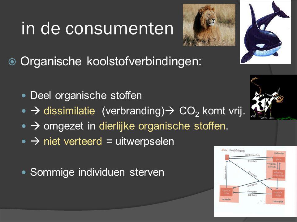 in de consumenten Organische koolstofverbindingen: