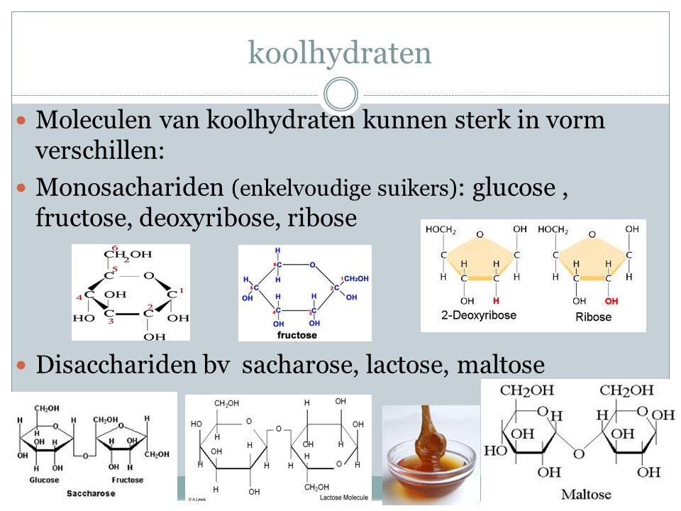 koolhydraten Moleculen van koolhydraten kunnen sterk in vorm verschillen: